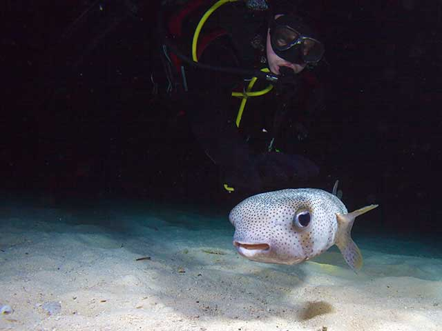 Night Diver
