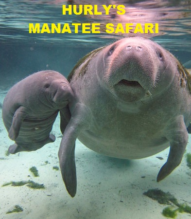 Manatee Safari