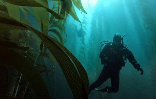 Southern Channel Islands Scuba Trip
