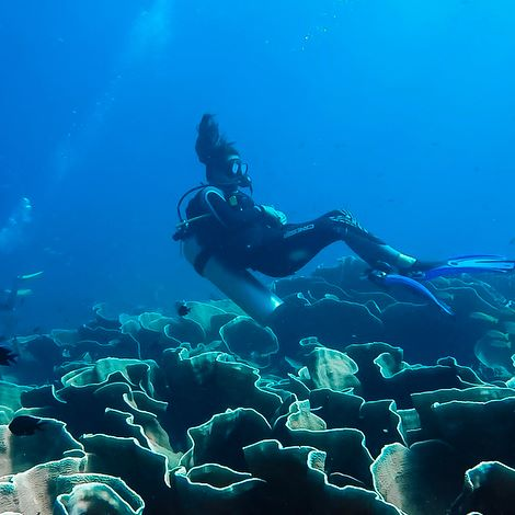PADI Open Water Scuba Diver (City of Temecula)