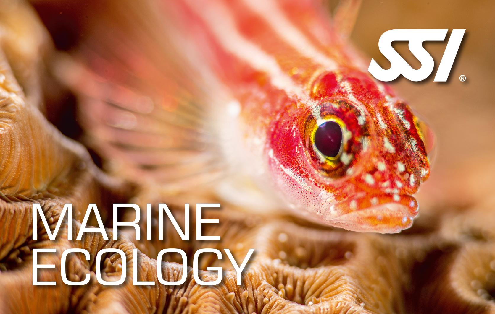 Marine Ecology -