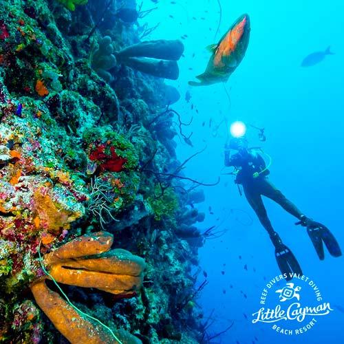 Little Cayman - October 15 - 22, 2022