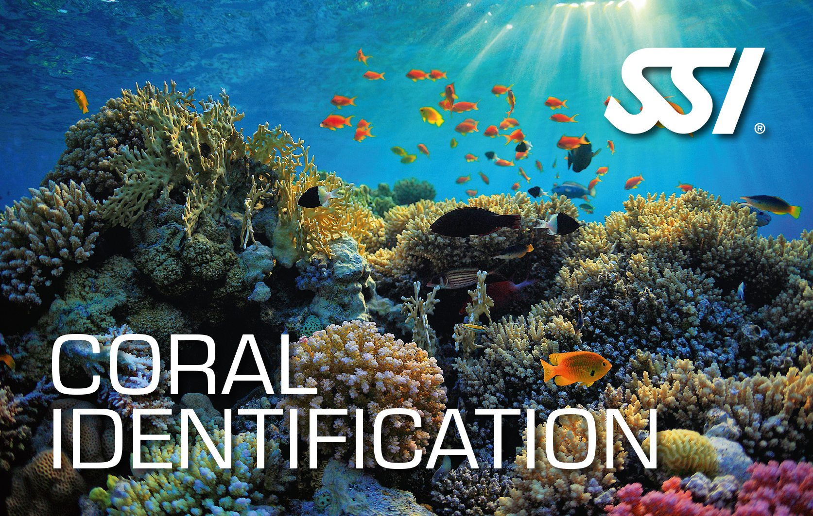 SSI Coral Identification Class