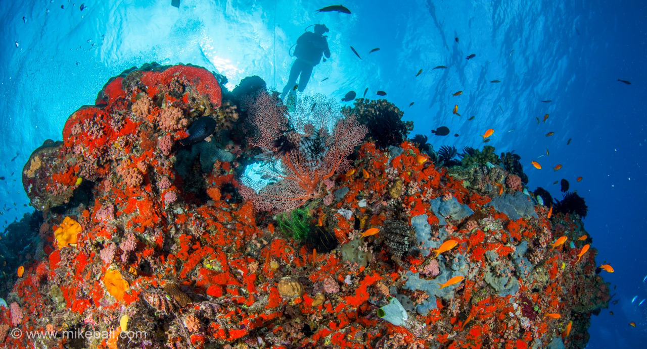 Dive the Great Barrier Reef and the Coral Sea