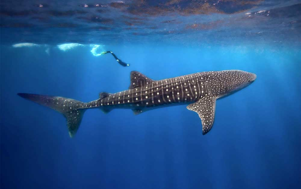 Dive Belize aboard the Belize Aggressor III in 2022