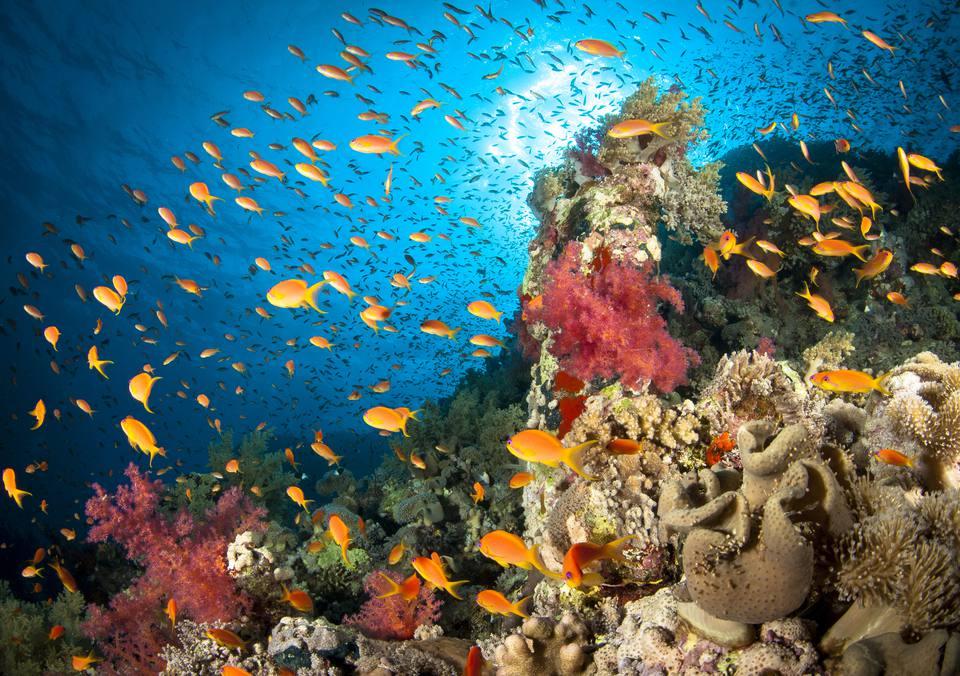 Dive the Red Sea aboard the Red Sea Aggressor