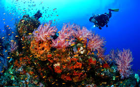 Dive the Best of Indonesia aboard the Arenui