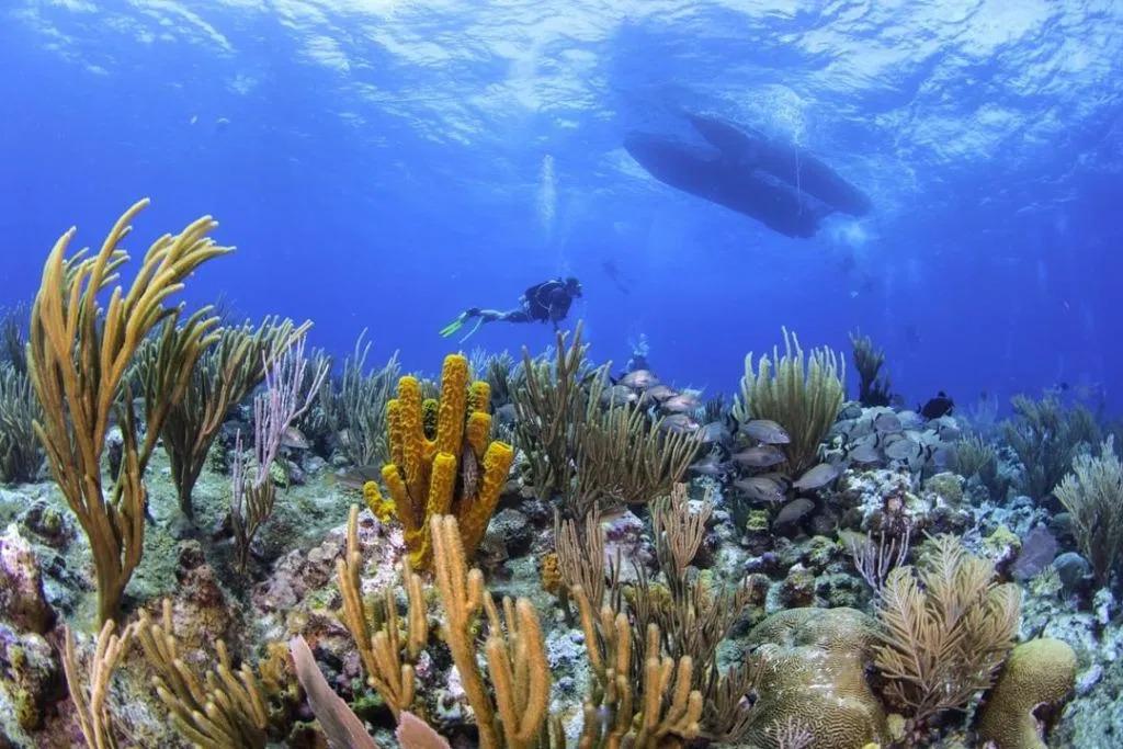 Grand Cayman – TBD
