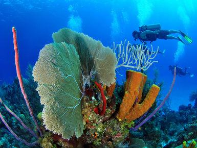 Cayman Islands Dive Trip - April 2021