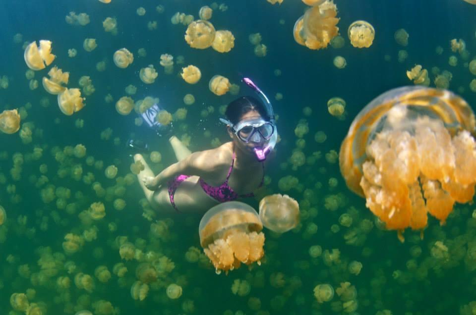 Palau | Chuuk Lagoon | TBD 2022 | Phoenix Scuba