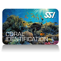 CORAL IDENTIFICATION SPECIALTY
