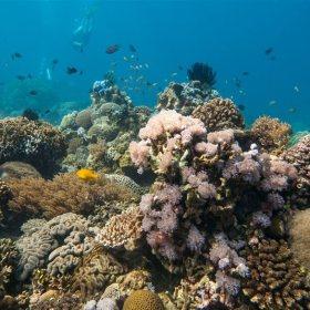 Puerto Galera | Philippines | Scandi Divers