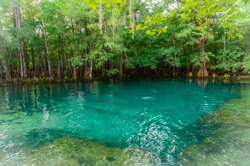 Tour - Manatee Springs Dive Master Led 1 Tank Dive