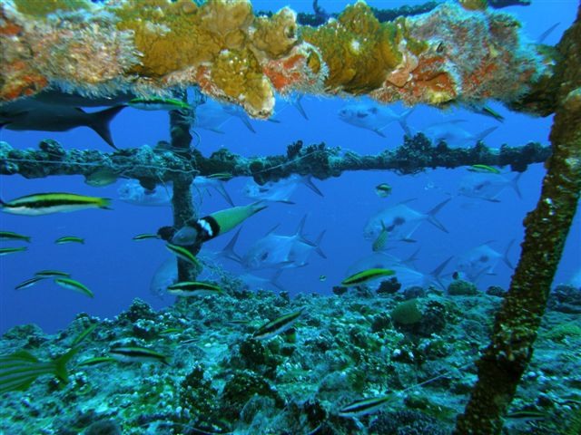 Sheridan Wreck Dive