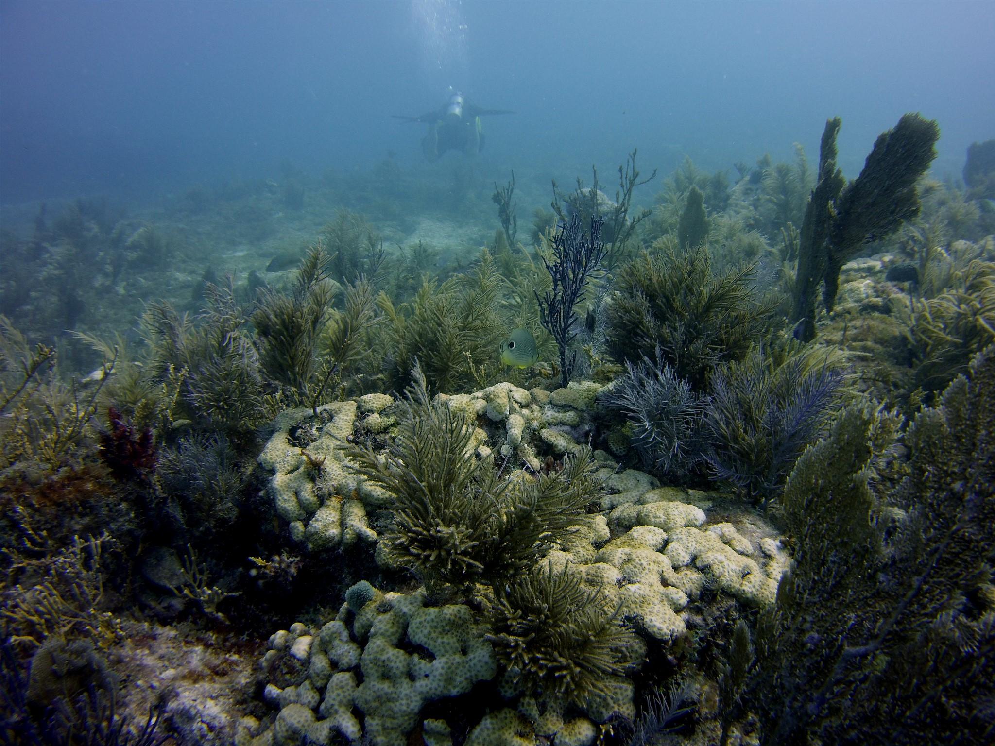 Dive Cayman Brac