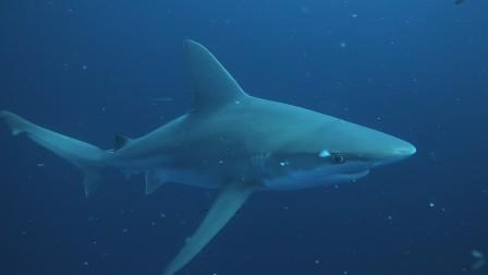 Reef and Shark Dive West Palm