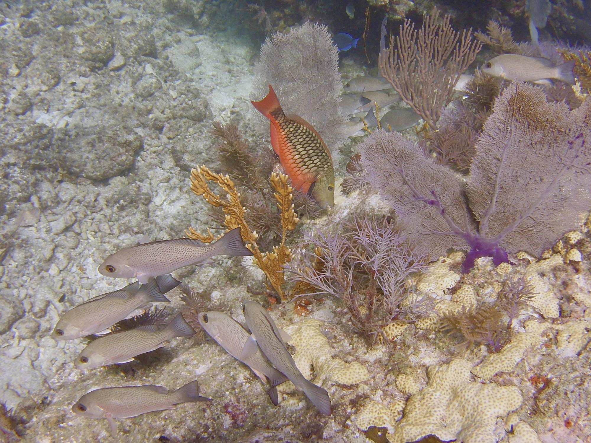 Dive Key Largo