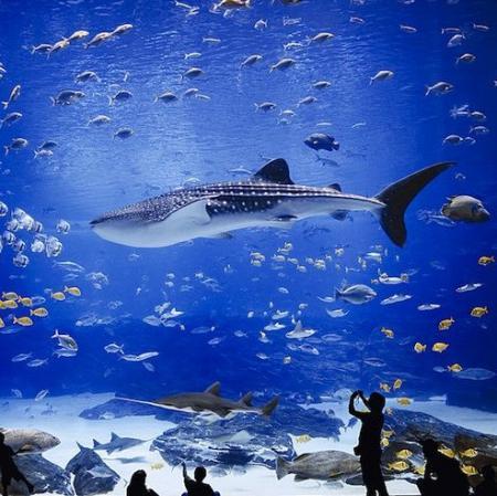Georgia Aquarium 10-15-21