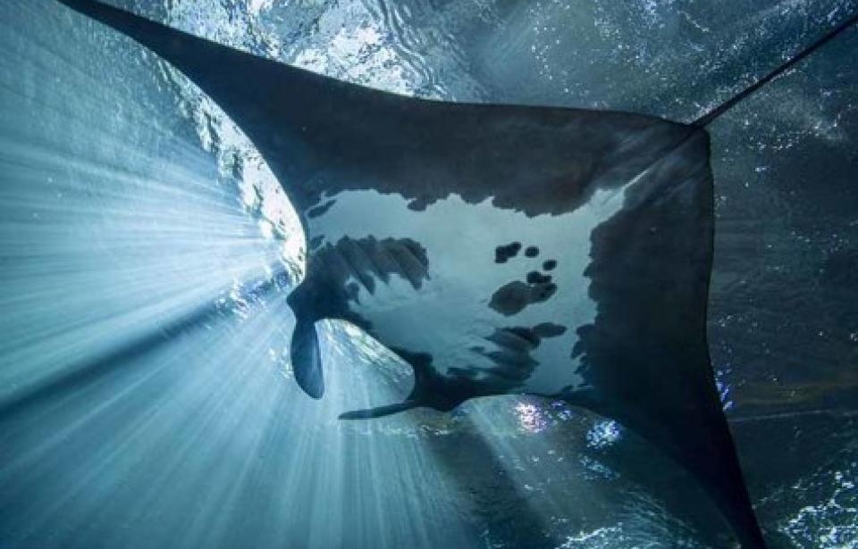 Georgia Aquarium 8-21-2021
