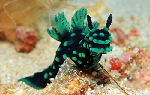 SDI Underwater Photographer