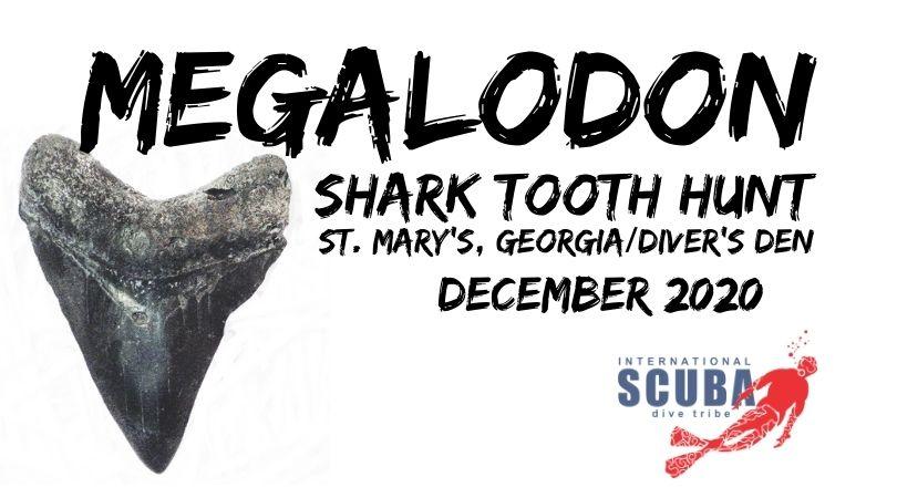 Megolodon Tooth Hunt, St. Mary's Georgia