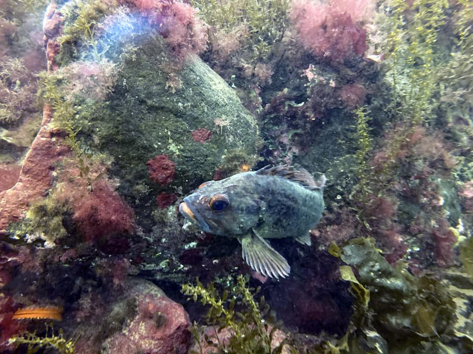 By Sea ~ Goby Garden