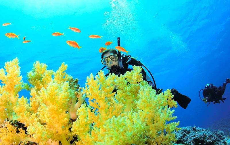 Underwater Ecologist: Coral Reef