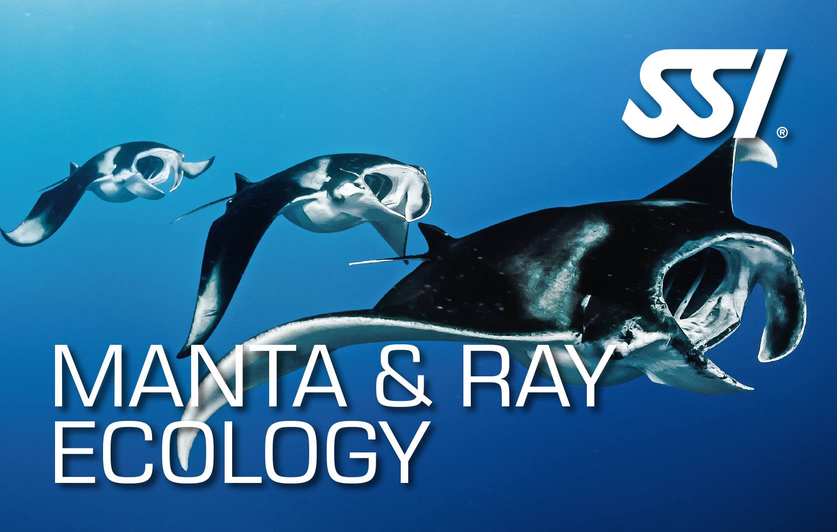 SSI Manta Ray Ecology