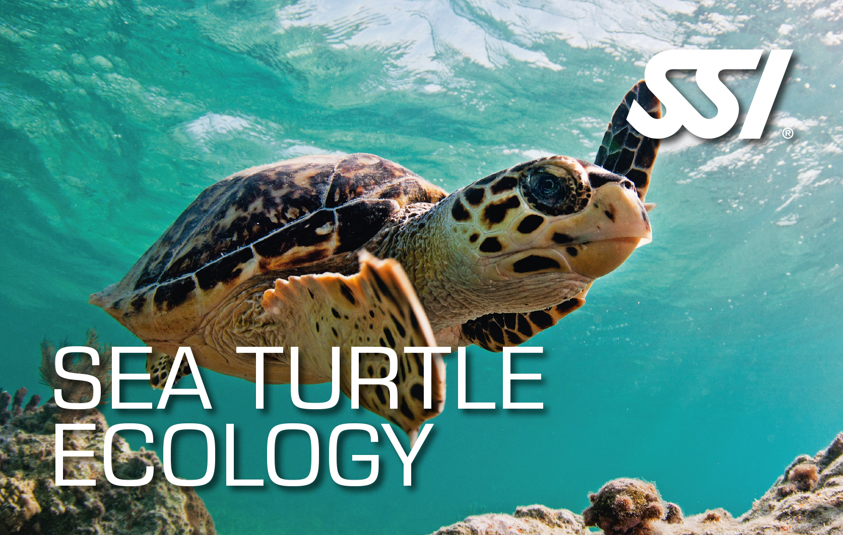 SSI Turtle Ecology
