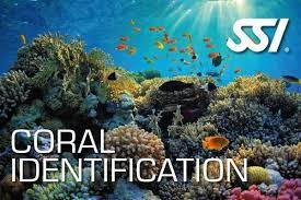 SSI Coral Ecology
