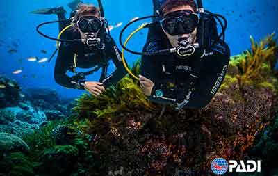 Coral Reef Conservation Diver